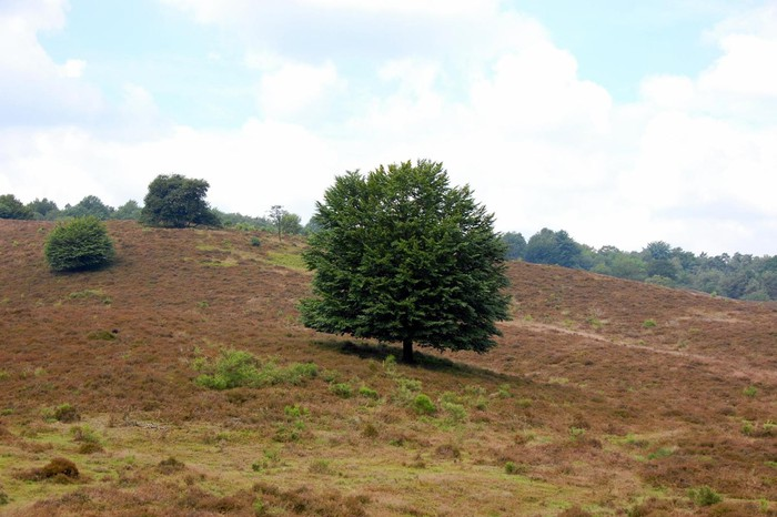 Foto de Posbank (Veluwe, The Netherlands)