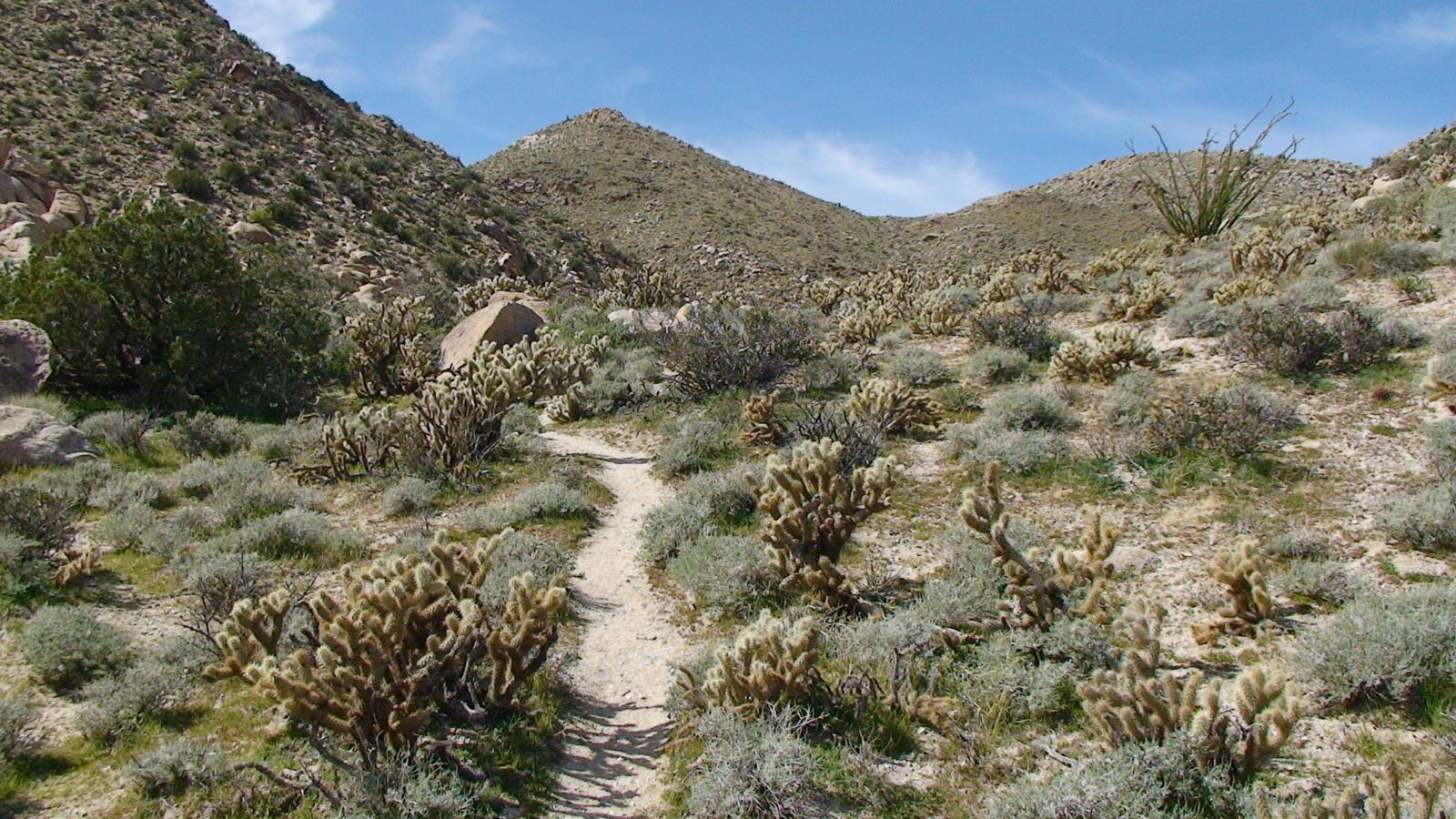 Photo of Anza Borrego - Mortero Palms To Goat Canyon Trestle