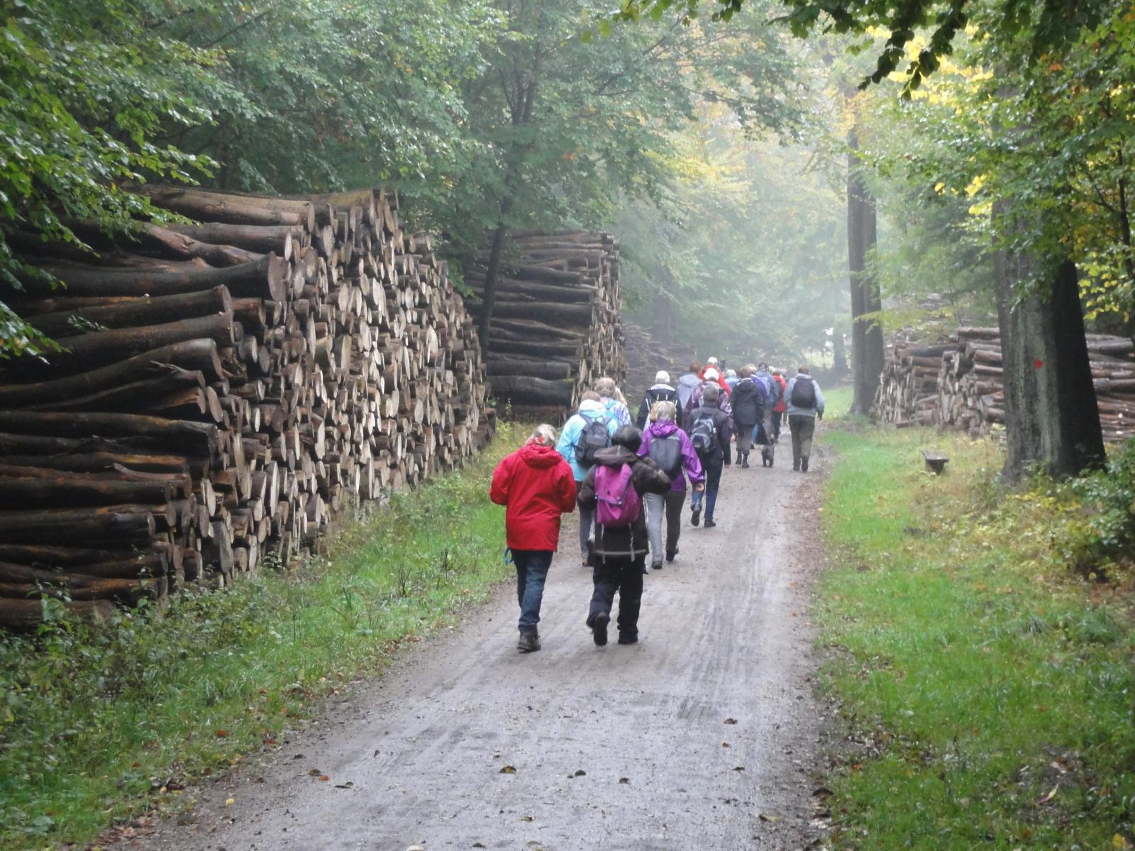 Фото Hikers and a large pile of felled down trees