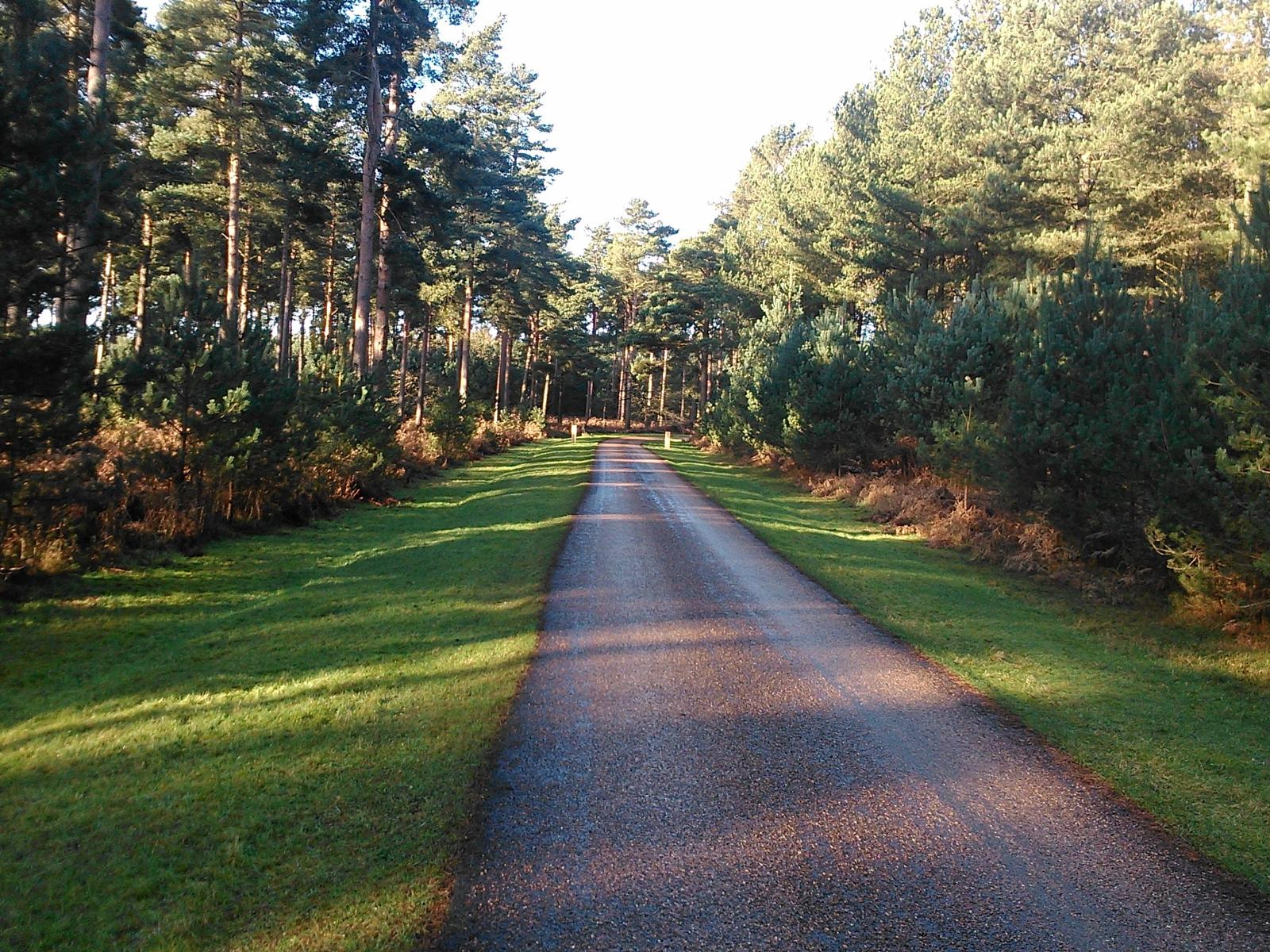 Foto di Thetford Fores: Red Route