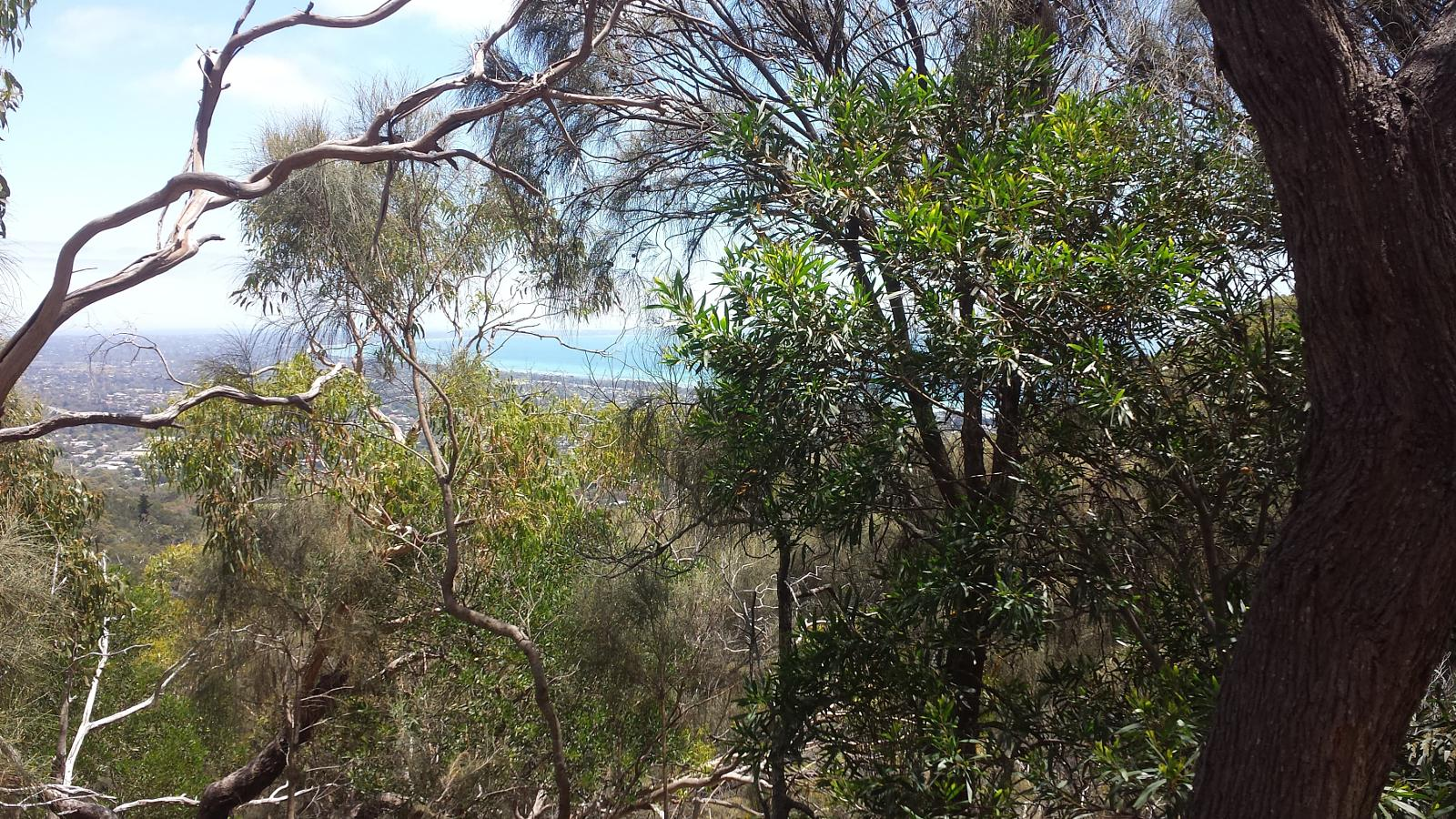 Foto di TWO BAYS TRAIL - Arthurs Seat - Lightwood Creek Campground.