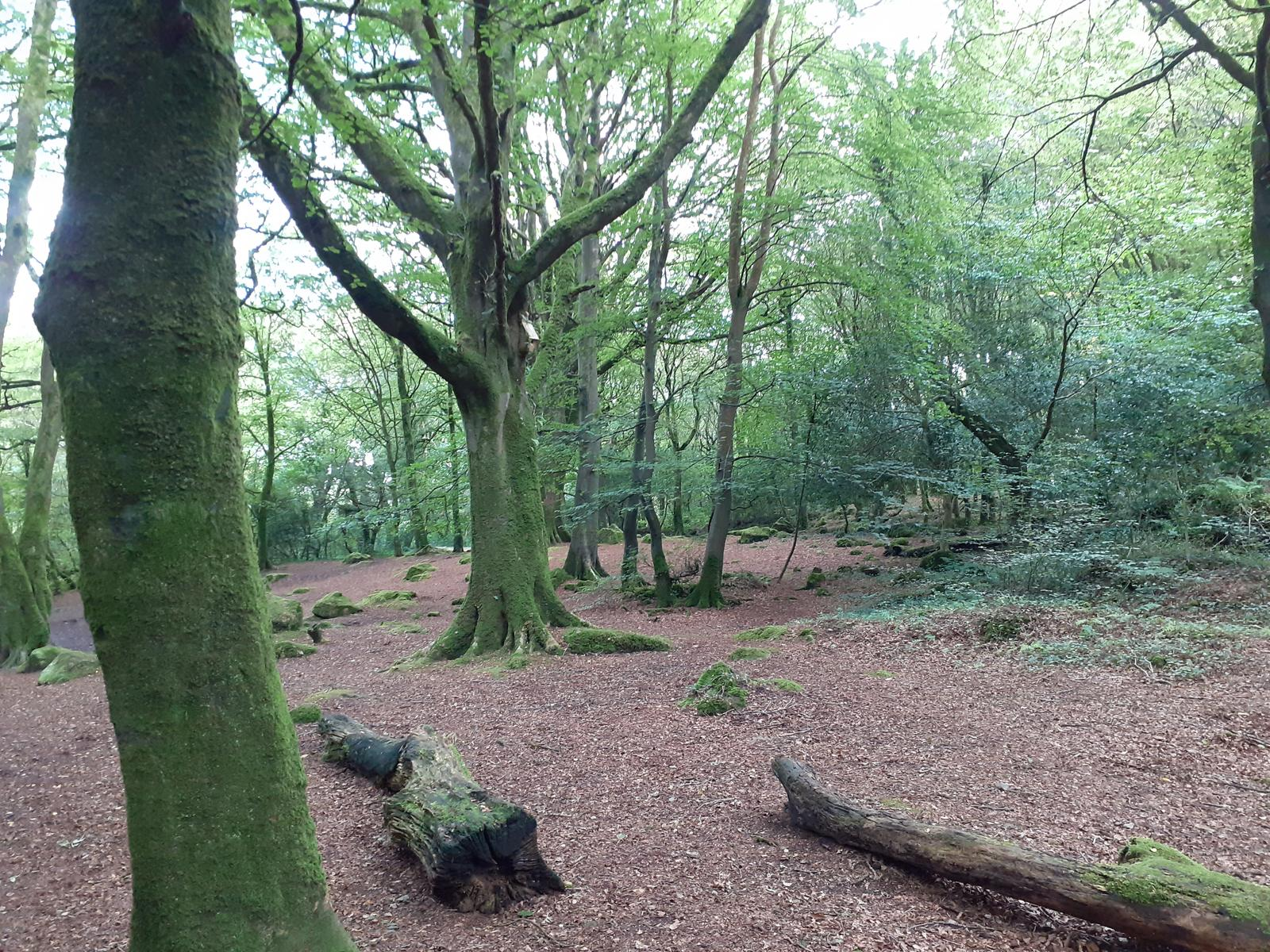 Photo of Irlanda-Galway-Berna Woods