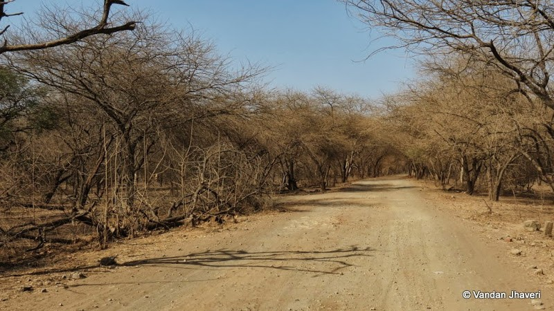 Слика од Gir Forest National Park, Route 5