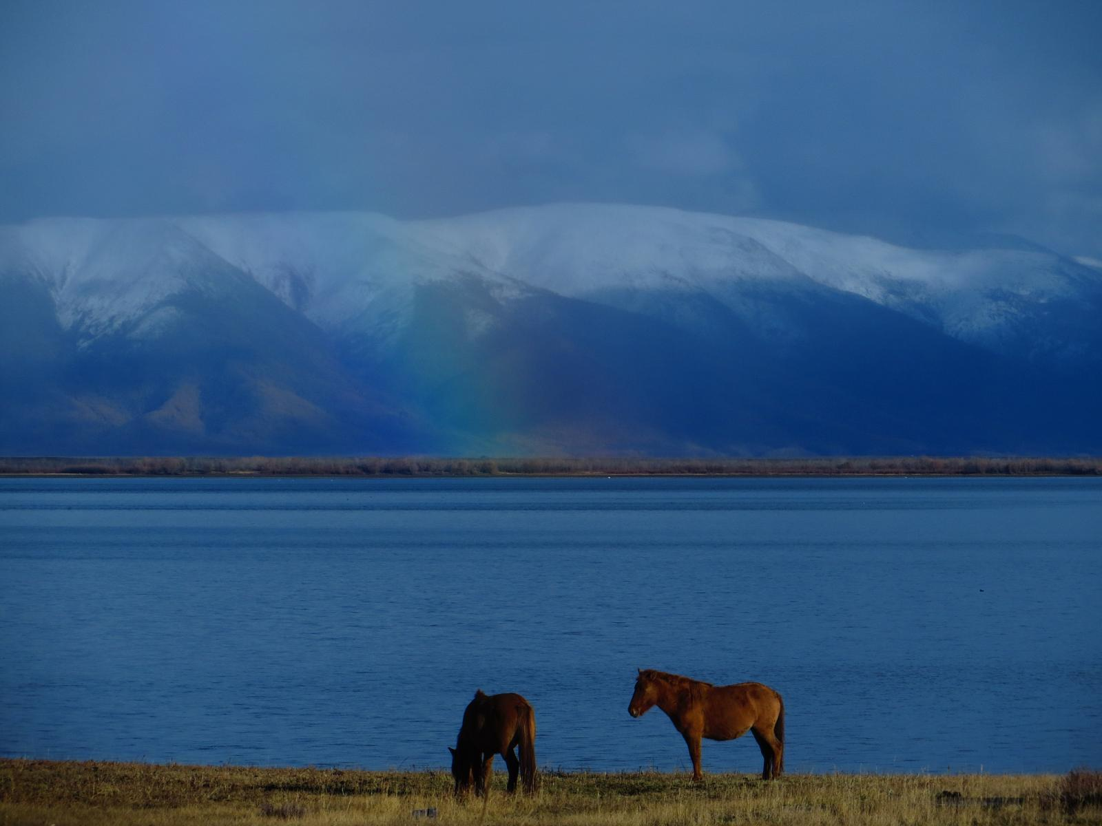 Foto af Horseback riding to the Tsaatan people in Mongolia
