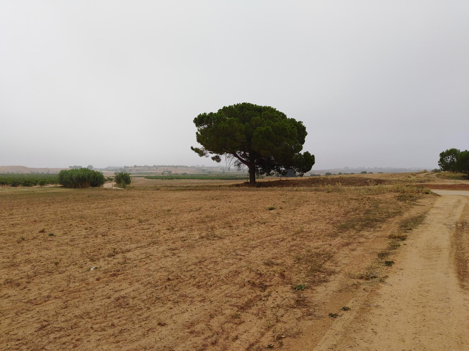 Photo of Madrigueras