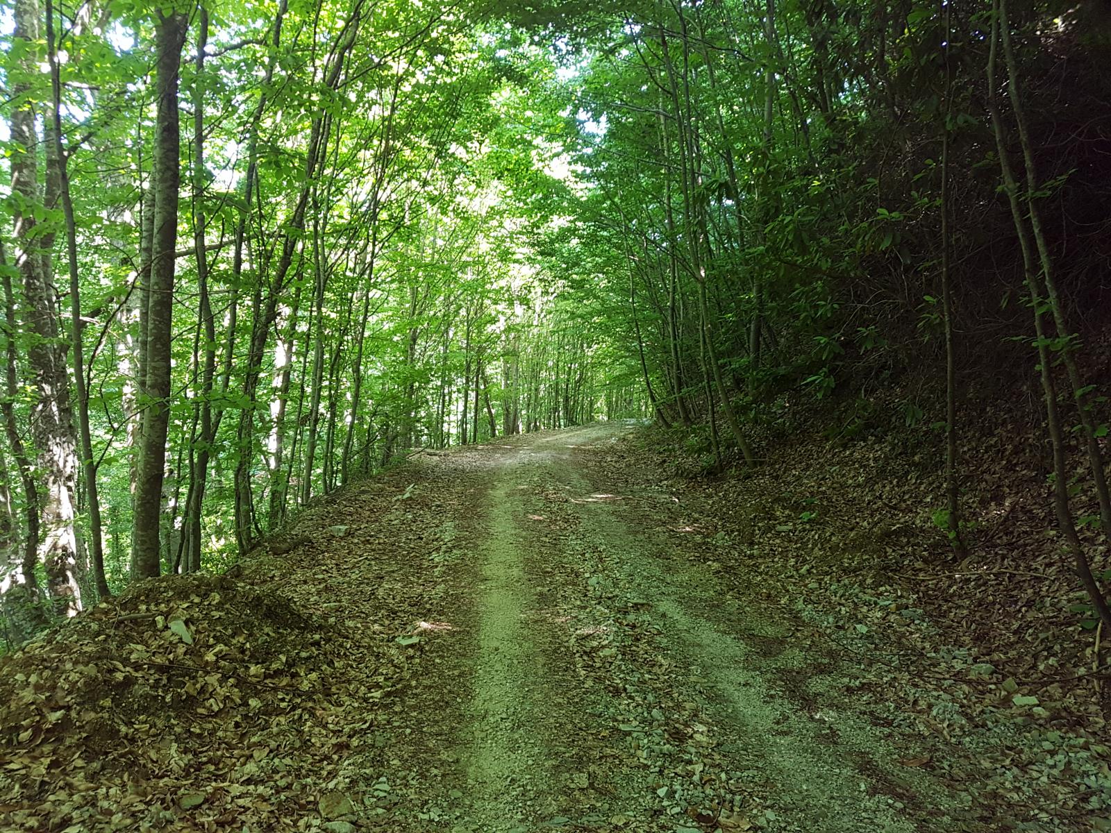 Wikiloc Picture Of Orman Yolu Forest Road 1 1 5