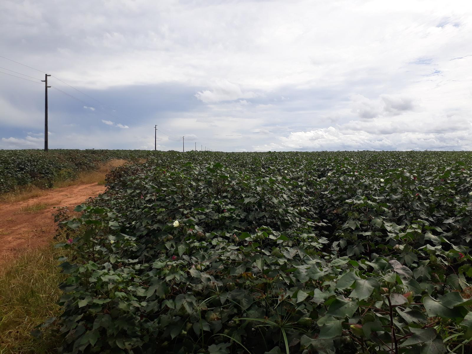 Photo of Fazenda Monte Alegre - Unicotton