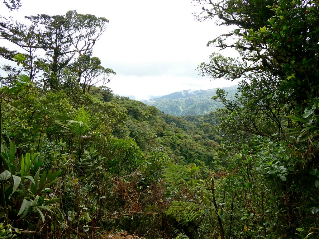 Photo of Reserva Bosque Nuboso Santa Elena