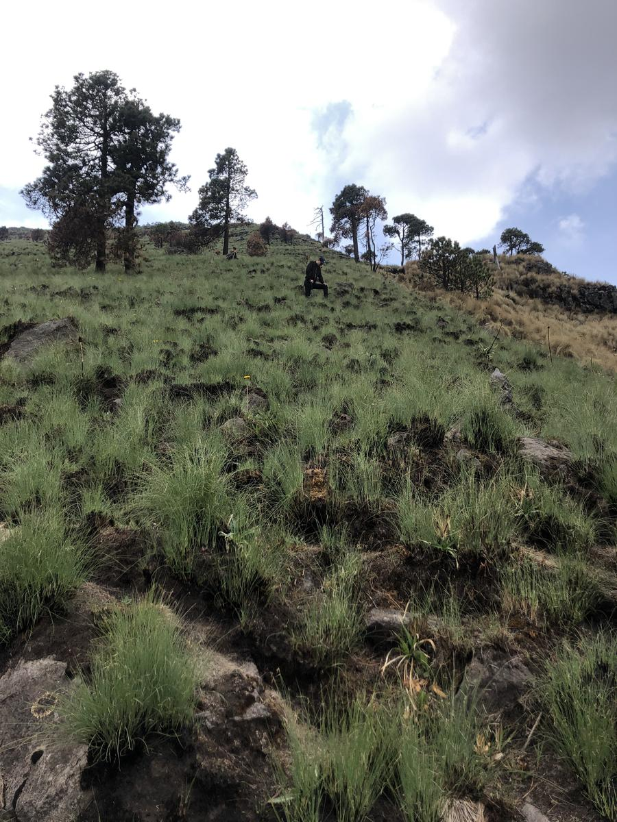 Photo de Ajusco Summit Trail