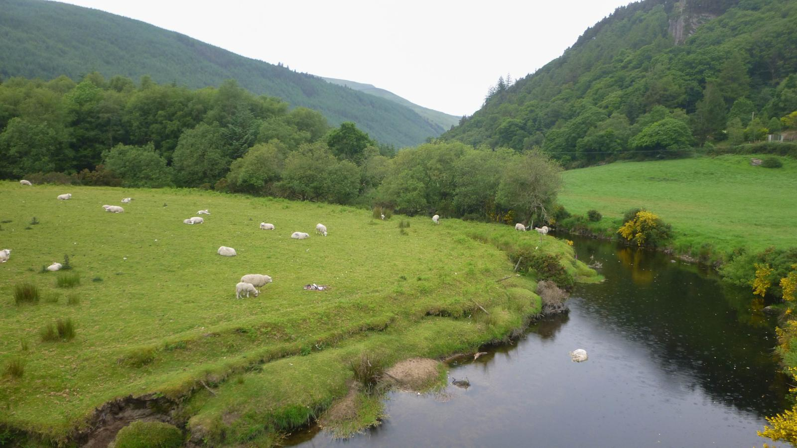 Foto de 4/6 WICKLOW WAY (4ºDIA: GLENMALURE - MOYNE)