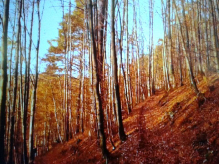 的照片 asheville-dupont mountain park pisgah forest-carolina del norte 1-11-15