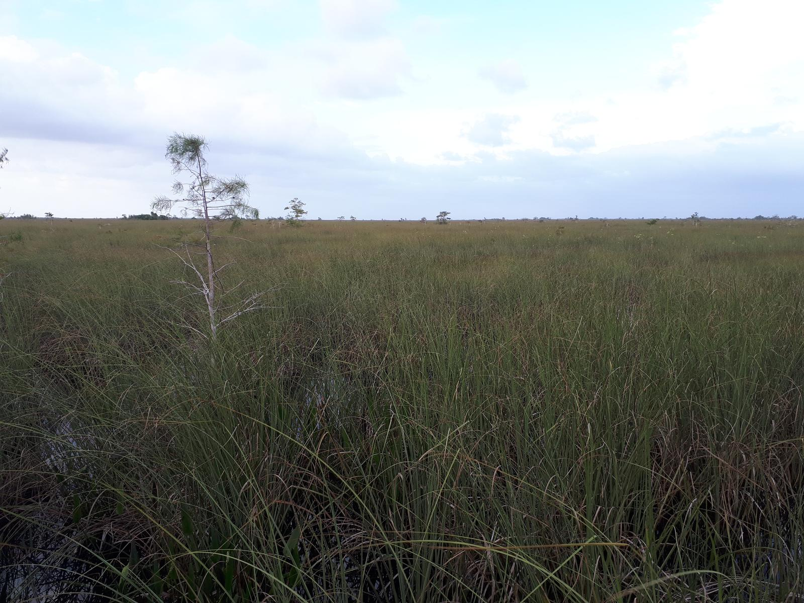 Photo of Everglades Pa-hay-okee Trail