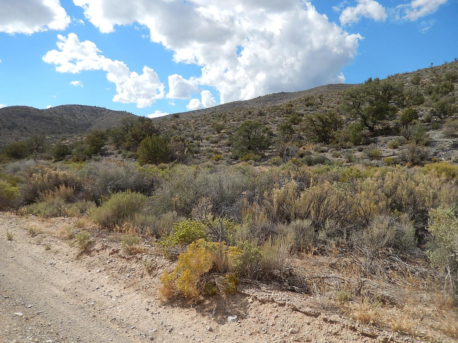 Foto de Mormon Well Trail