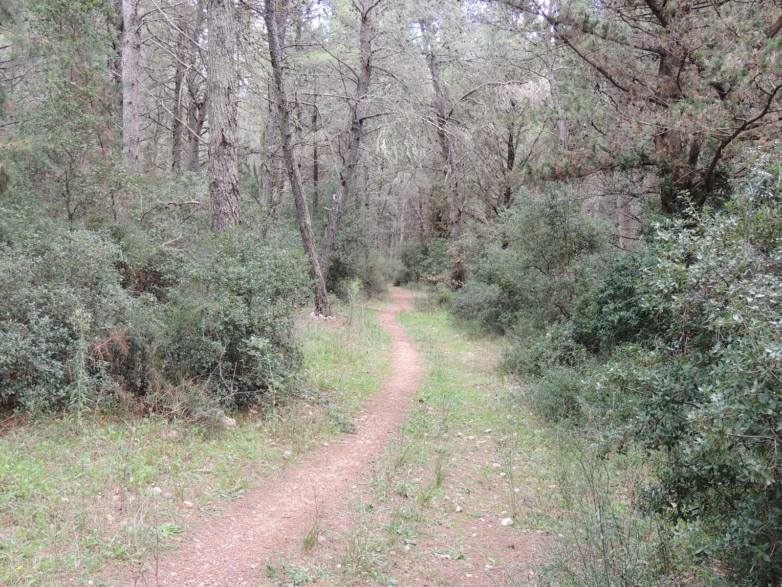 Foto de Long Walk through Foresta Mercadante