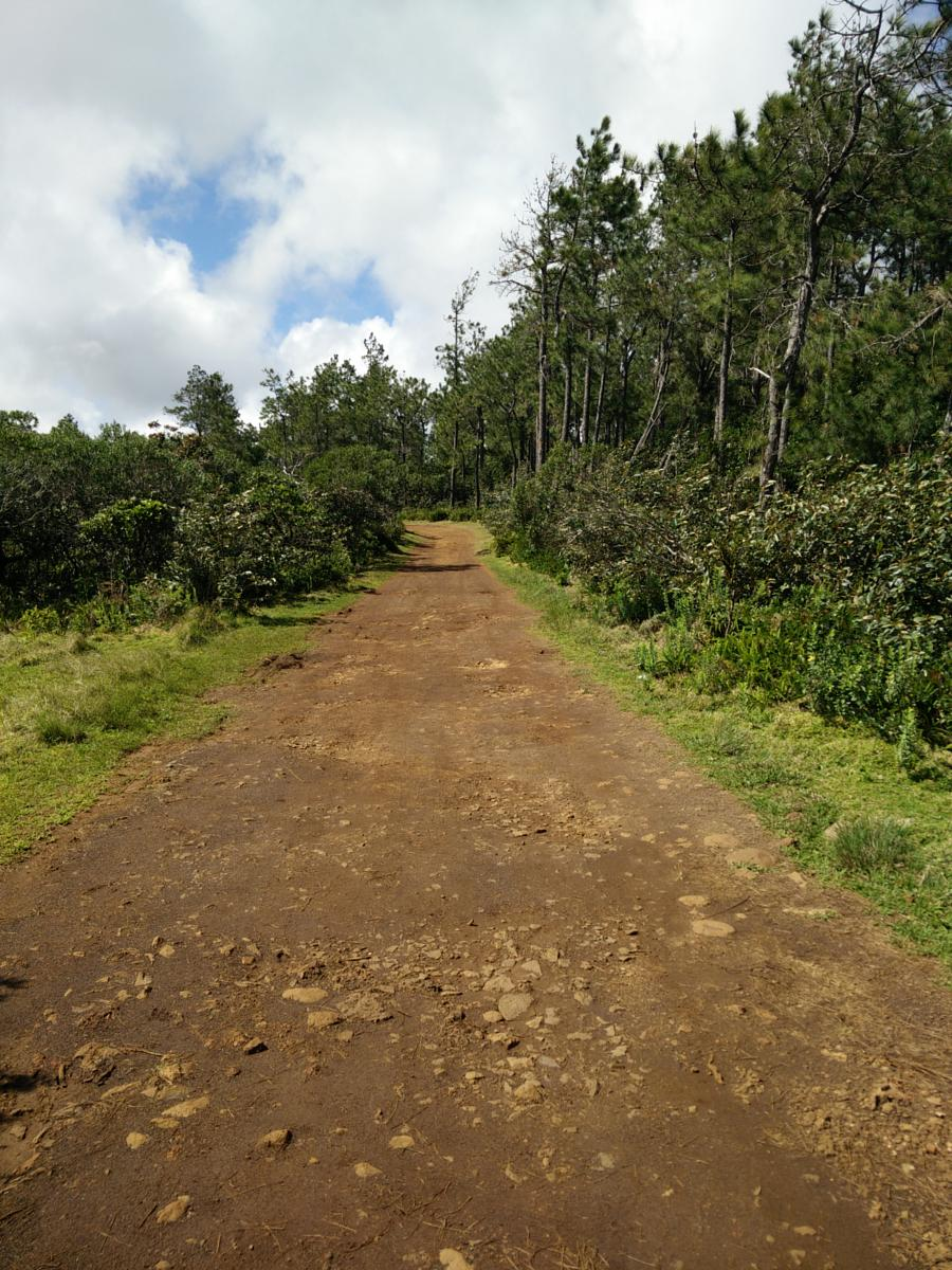 Photo of Machabee Trail and Forest Loop