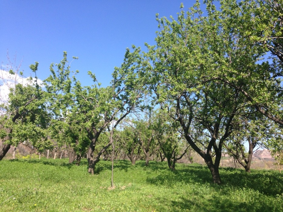 Foto von Pórtugos -- small hike through the orchards
