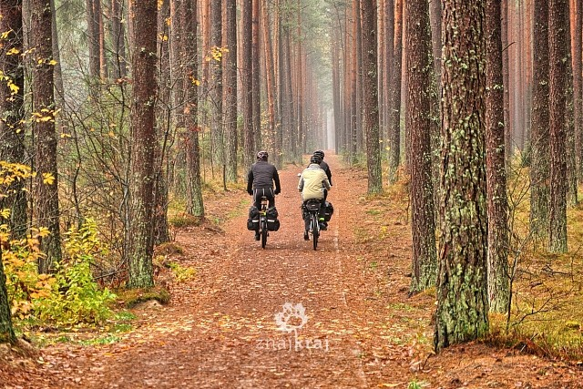 Zdjęcie Cycling Cashubian Route in Tuchola Forest