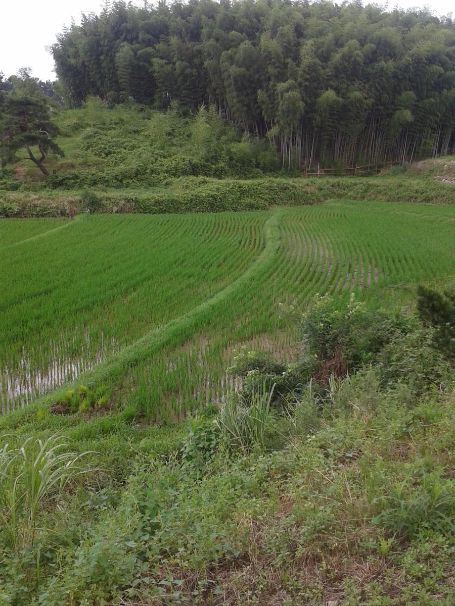 Foto di Day 1 - Second Leg from Damyang to Naejang Mountain