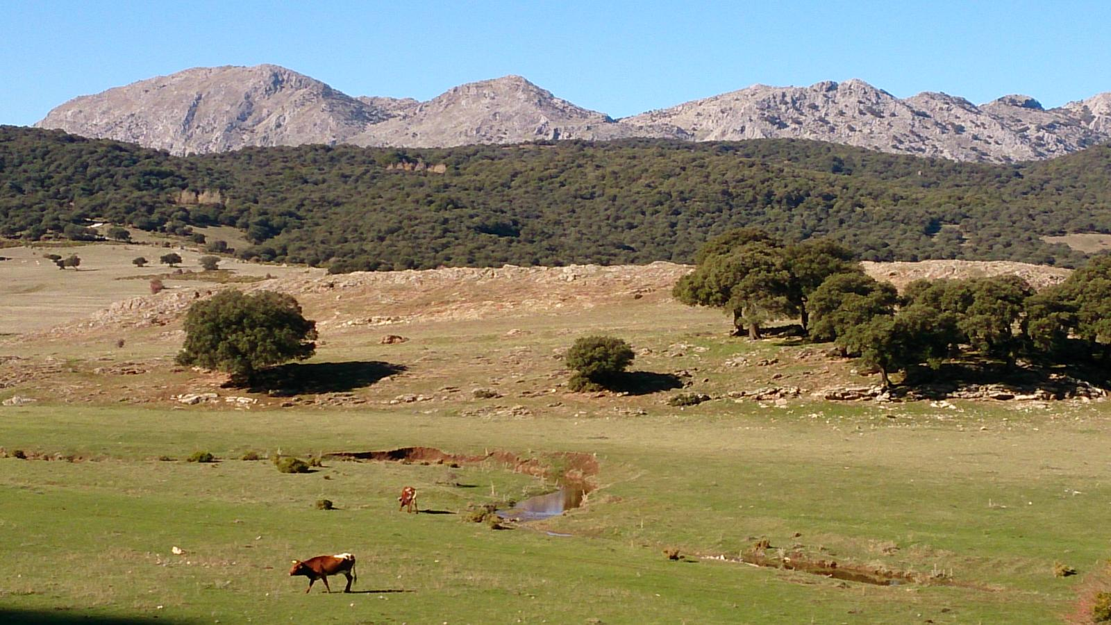 Photo of Llanos del Republicano