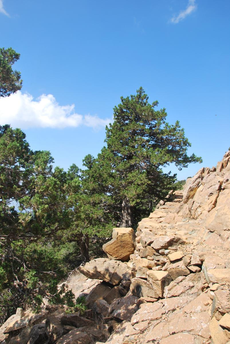 Photo of Artemis Trail & OLYMPOS MOUNTAIN-CHIONISTRA (Cyprus)